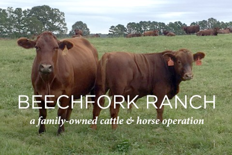 Beechfork Ranch